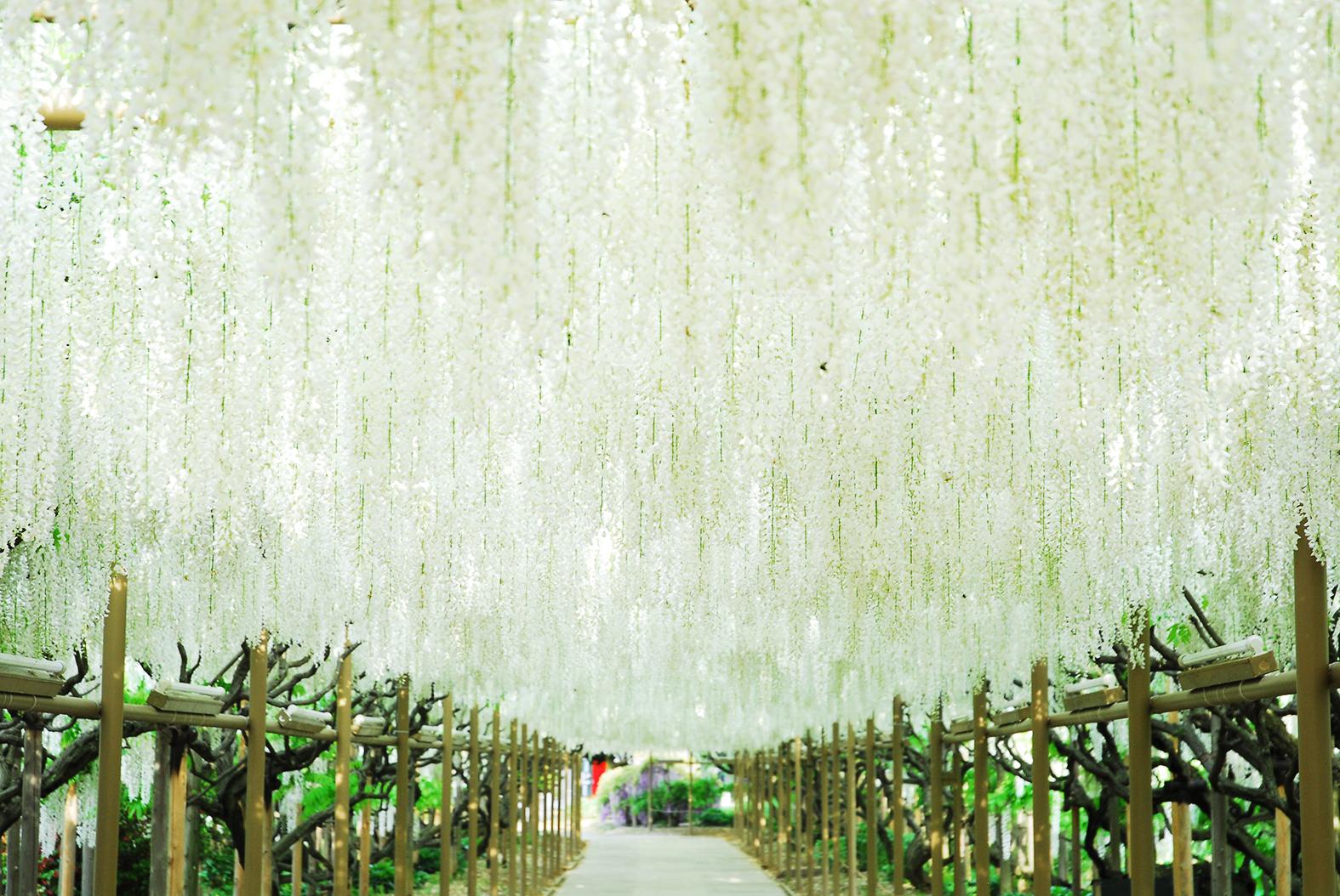 百花繚乱!須賀川牡丹園 & ライトアップの足利フラワーパーク